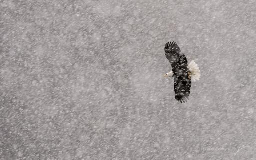 18 - Winter Flight